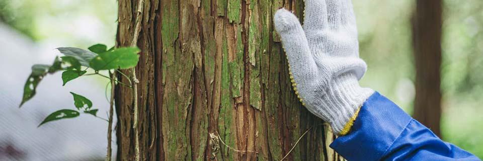 徳島電機産業 林業の取り組み